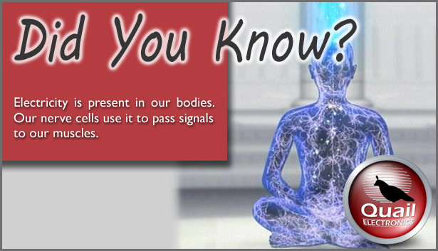 Electricity in bodies